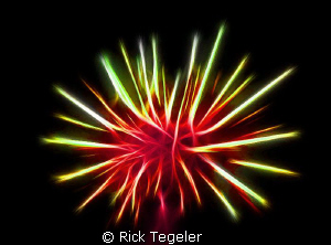 Urchin... enjoy! by Rick Tegeler 